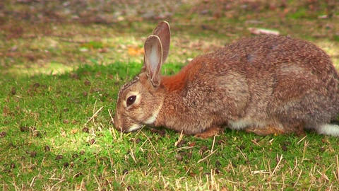 A cute bunny sits in the grass Stock Video Footage