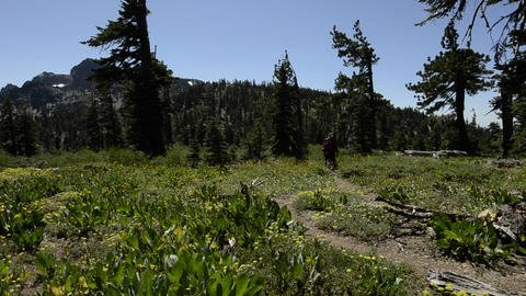 Backpackers on the Pacific Crest Trail on Packer L Stock Video Footage
