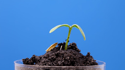Rotate Plant 3k Footage