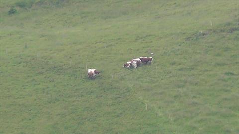 European Alps Kitzbuhel Austria Aerial 19 cows Footage