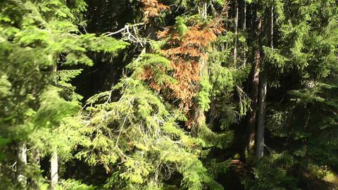 European Alps Kitzbuhel Austria Aerial 59 Stock Video Footage