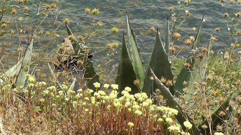Plants on Seaside Stock Video Footage