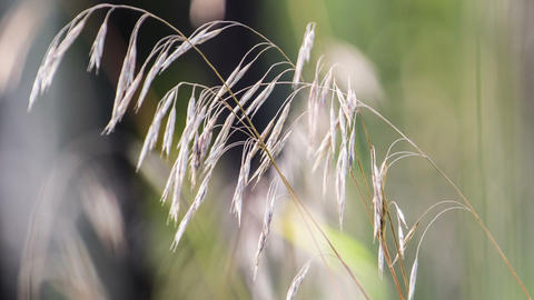 Macro of yellow grass swaying in the wind. Autumn. Footage