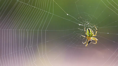 Extreme closeup of spider and web. Shot in RAW, wi Stock Video Footage