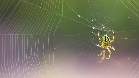 Extreme closeup of spider and web. Shot in RAW, wi Footage