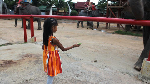 Cute Asian Girls Feeds Elephant Stock Video Footage