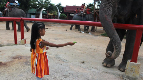 Cute Asian Girls Feeds Elephant Stock Video Footage