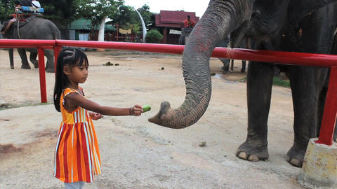 Cute Asian Girls Feeds Elephant Footage