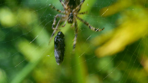 Spider coming for its prey Stock Video Footage