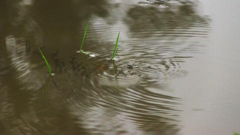 Pond skaters on a surface of water Stock Video Footage