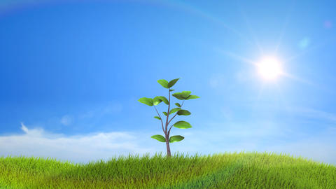 Tree growing on a green hill with the sun and clou Animation
