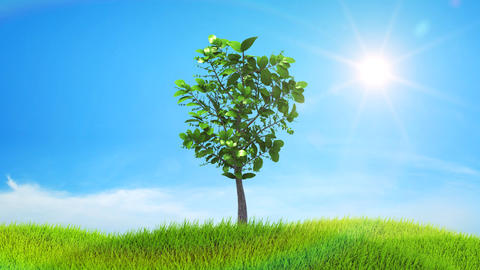 Tree growing on a green hill with the sun and clou Stock Video Footage