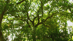 Countryside country tree light wind green gentle Stock Video Footage