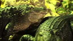 Crocodiles 2 Stock Video Footage