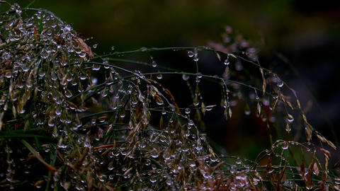 pearls of dew on swaying grass in moonlight Stock Video Footage
