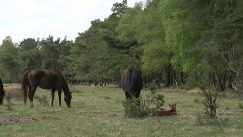 Horse family in the woods Footage