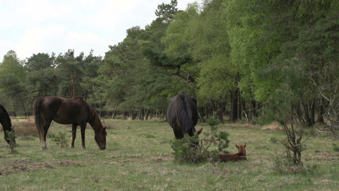 Horse family in the woods Stock Video Footage