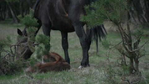 Horse with baby in woods Stock Video Footage