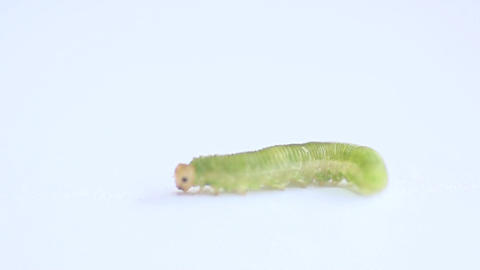 A caterpillar on a white background in 400 fps mac Stock Video Footage