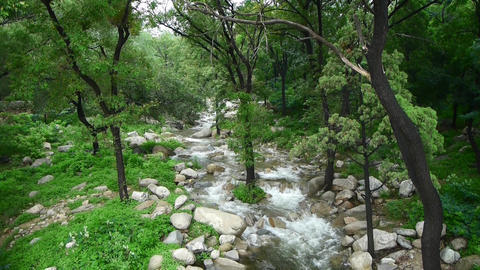 Mountain creek stream from forests & shrubs Animation