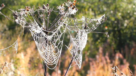 dew on spider web Footage
