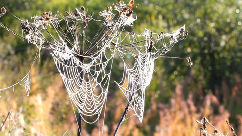 dew on spider web Stock Video Footage