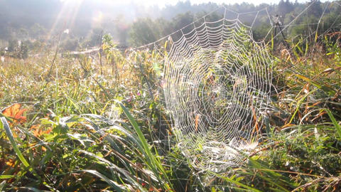spider web and sun Stock Video Footage