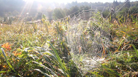 spider web and sun Footage