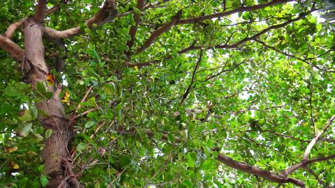 Tree Leaves Stock Video Footage