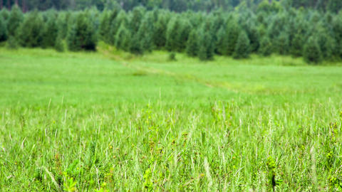 Green field of grass with heat haze. Shot to RAW, Stock Video Footage
