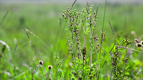 Green field of grass macro. Shot to RAW, wide dyna Stock Video Footage
