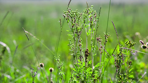 Green field of grass macro. Shot to RAW, wide dyna Footage