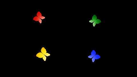 Butterfly S a All HD Stock Video Footage