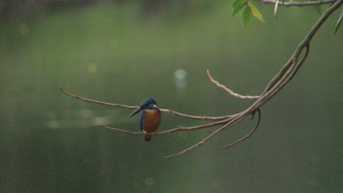Ice bird in tree Stock Video Footage