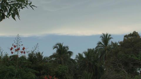 Bird in Sri Lanka Stock Video Footage
