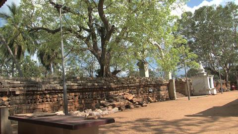 Temple garden in Anuradhapura, Sri Lanka Stock Video Footage