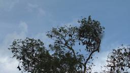 Bats in tree Stock Video Footage