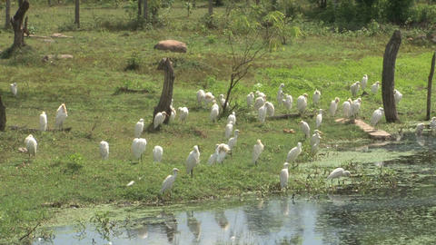 Birds near the water Stock Video Footage