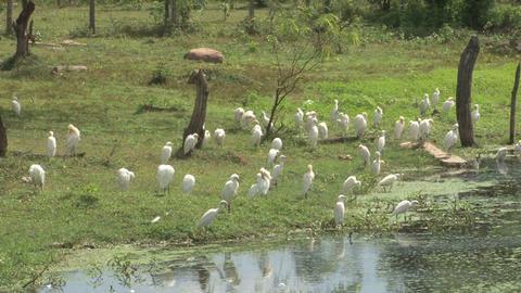 Birds near the water Footage