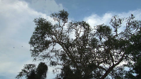 Bats in tree with sound Stock Video Footage