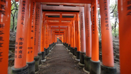 Fushimi Inari shrine Footage