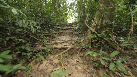 Walking in jungle Footage