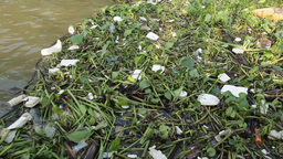 Water trash plastic pollution Stock Video Footage