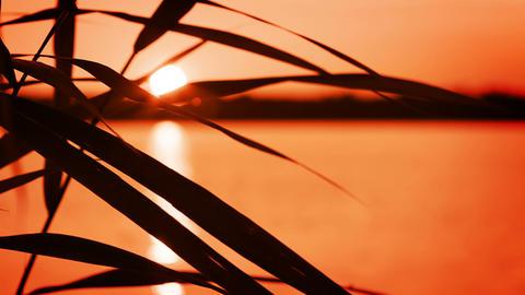 Lake. Grass. Sunset Stock Video Footage