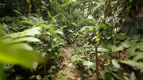 Steadicam walk in jungle Stock Video Footage