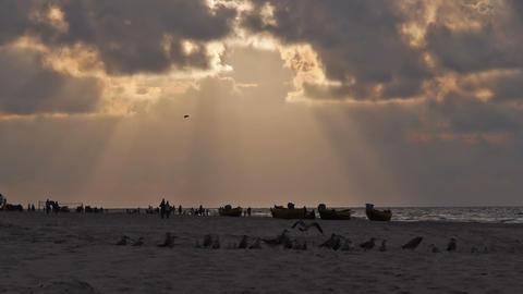 Seagulls on the beach Stock Video Footage
