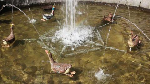 fountain Favourites in petergof park St. Petersbur Stock Video Footage