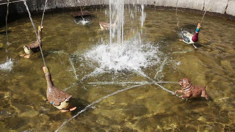fountain Favourites in petergof park St. Petersbur Footage