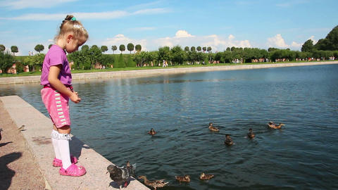 little girl feeding ducks in park Stock Video Footage
