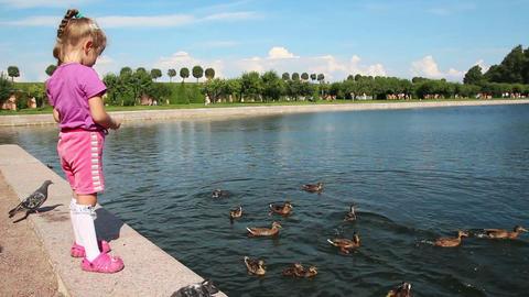 little girl feeding ducks in park Footage